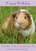"Guinea Pig-Happy Birthday - ""Mind Over Matter"" Theme"